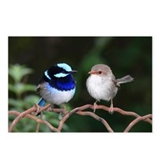 Blue Fairy Wrens Postcards (Package of 8)