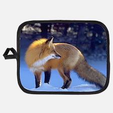 Backlit Red Fox Potholder