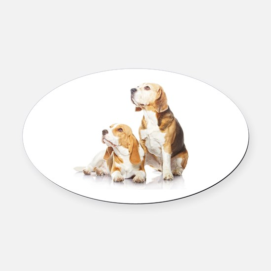 Two beagle dogs isolated on white  Oval Car Magnet