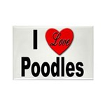I Love Poodles Rectangle Magnet (10 pack)
