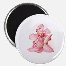 two pink orchids on white Magnet
