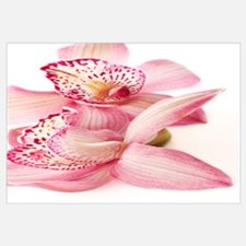 Funny Orchid