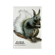 Kaibab Squirrel Rectangle Magnet