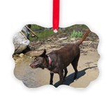 Chocolate lab Picture Frame Ornaments