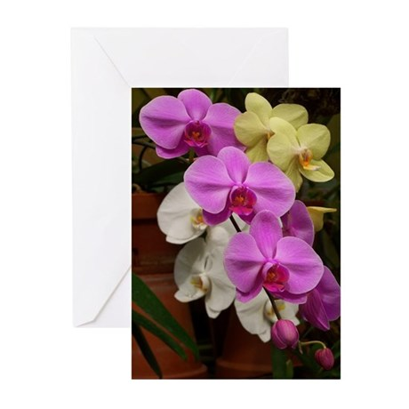 Gina's Orchid Greeting Cards (Pk of 10)