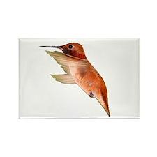 rufous hummingbird Magnets