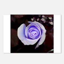 Purple rose colored flower Postcards (Package of 8