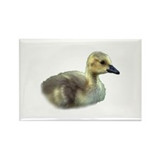 baby goose Magnets