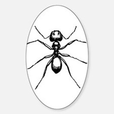 Carpenter Ant Oval Decal