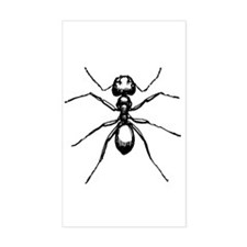 Carpenter Ant Rectangle Decal
