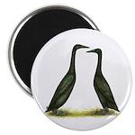 Black Runner Ducks Magnet