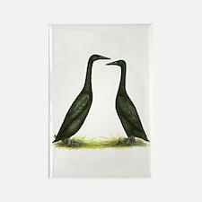 Black Runner Ducks Rectangle Magnet
