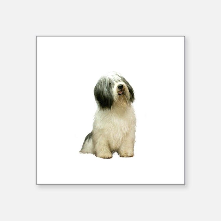 "Polish Lowland Sheepdog 1 Square Sticker 3"" x 3"""
