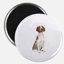 AmericanFoxhound1 Magnet