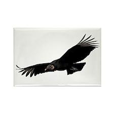 Black Vulture Magnets
