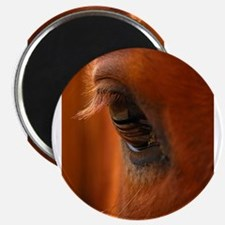 """Eye of the Horse 2.25"""" Magnet (100 pack)"""