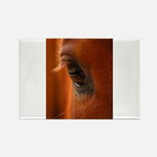 Eye of the Horse Rectangle Magnet