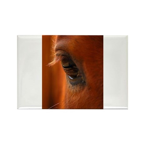 Eye of the Horse Rectangle Magnet (100 pack)