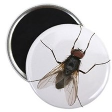 Large Housefly Magnets