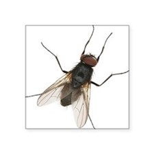Large Housefly Sticker
