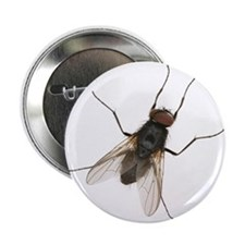 """Cute Bugs and insects 2.25"""" Button"""
