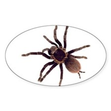 Hairy Brown Tarantula Decal