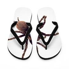 Cute Bugs Flip Flops