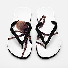 Unique Spider Flip Flops