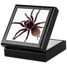 Funny Bug Keepsake Box