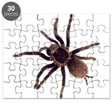 Cute Bugs Puzzle