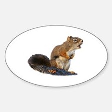 Singing Squirrel Decal
