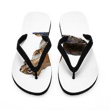 Cool Squirrel funny Flip Flops