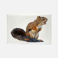 Singing Squirrel Magnets