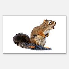 Singing Squirrel Decal