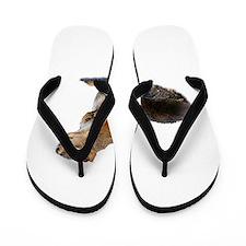 Unique Squirrel funny Flip Flops