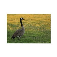Lone Goose Magnets