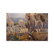 African Safari Magnets