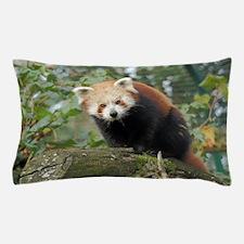 Cute Little cat Pillow Case
