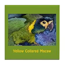 Yellow Collared Macaw Tile Coaster
