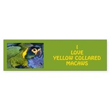 Yellow Collared Macaw Bumper Bumper Sticker
