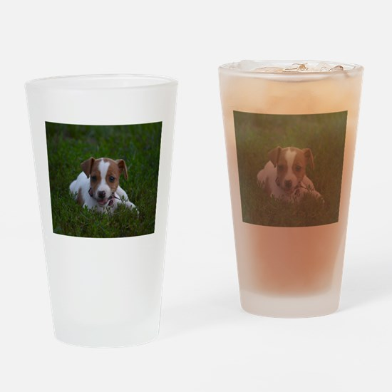 Unique Jack russell Drinking Glass