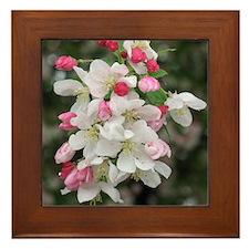 Cherry Blooms Framed Tile