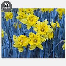 Daffodil Invasion Puzzle