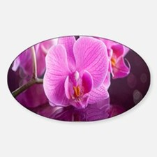 Pink Orchids Decal