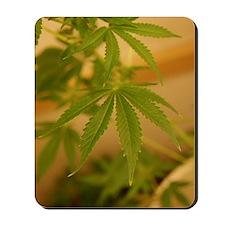 marijuana plant Mousepad