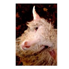 Funny Baby goat Postcards (Package of 8)