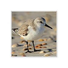 Sand Piper and Seashell Sticker