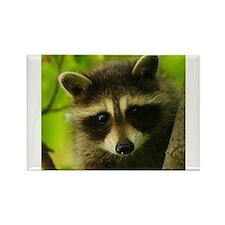 raccoon Magnets