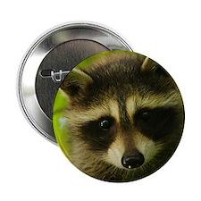 """Cute Raccoon 2.25"""" Button (10 pack)"""