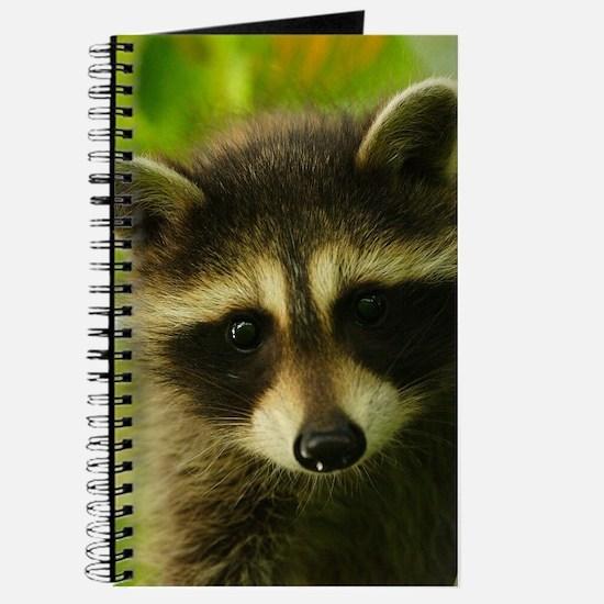 Cute Raccoon Journal